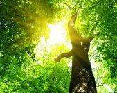 Green leaves — ストック写真