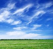 Grönt fält — Stockfoto