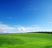 Green field — Foto Stock