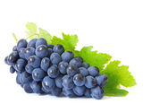 Grapes — Stock fotografie