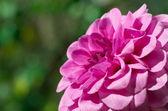 Blume grün — Stockfoto