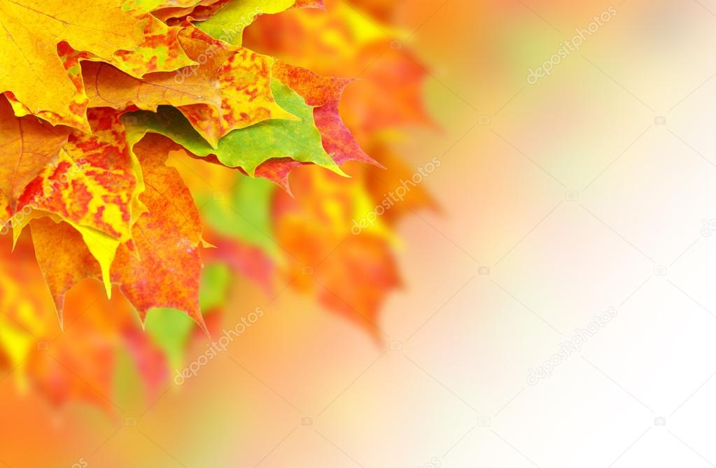 Autumn leaves  — Stock Photo #13676458
