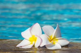 Flowers on swimming pool — Stock Photo