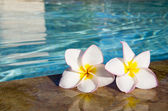 Flower on pool — Stock Photo
