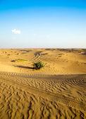 Desert — Stockfoto
