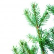 Fir tree branches  — Stock Photo #16641517