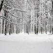Winter forest — Stock Photo #16642833