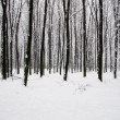 Winter forest — Stock Photo #16642839