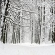 Winter forest — Stock Photo #16642929