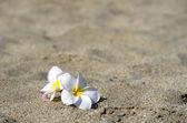Fleurs — Photo