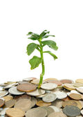 Plant and coins — Stock Photo