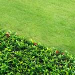 Grass — Stock Photo #18235839