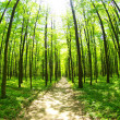 Green forest — Stock Photo #19094143