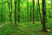 Verde floresta — Fotografia Stock