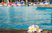 Flower Plumeria on pool — Stock Photo