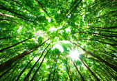 Zielony las — Zdjęcie stockowe