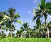 绿色棕榈树 — 图库照片