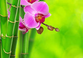 Green bamboo and orchid — Stock Photo