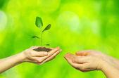 Planter en mains — Photo