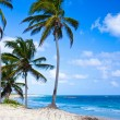 Stock Photo: Beach with palm trees