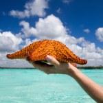 Starfish in hand — Stock Photo #21874549