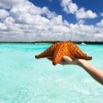 Starfish in hand — Stock Photo #21874559