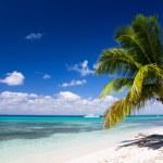 Palms and sea beach — Stock Photo #21874793