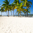 Palms and beach — Stockfoto