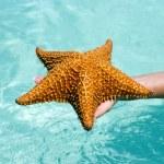 Starfish in hand — Stock Photo #21876291