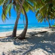 Beach with palm — Stockfoto