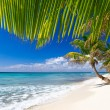 Beach and Palm tree - Stock Photo