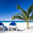 Beach and Palm tree - Stockfoto