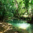 Tropical forest - Stockfoto