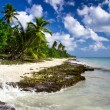 Beach with caribbean sea — Stockfoto
