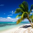 Tropical sea — Stock Photo #22227177