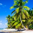 Royalty-Free Stock Photo: tropical