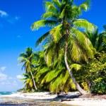 Tropical — Stock Photo #22227227