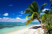 热带海 — 图库照片