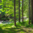 Green forest — Stock Photo #22358905