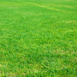Green grass — Stock Photo #22359197