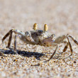 Stock Photo: Crab