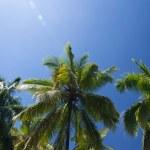 Palm tree — Stock Photo #22731627