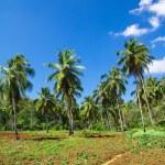 Palm tree — Stock Photo #22731649