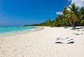 Beach chairs under palm — Stock Photo