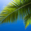 Palm tree — Stock Photo #23664605