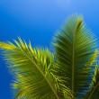 Palm tree — Stock Photo #23664637
