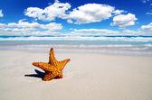 Praia — Fotografia Stock