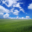 Green field — Stock Photo #28711077