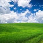 Green field — Stock Photo #28711115