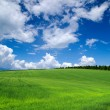 Green field — Stockfoto
